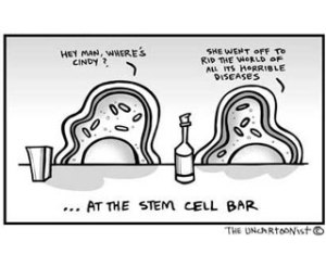 Stem Cell Humour